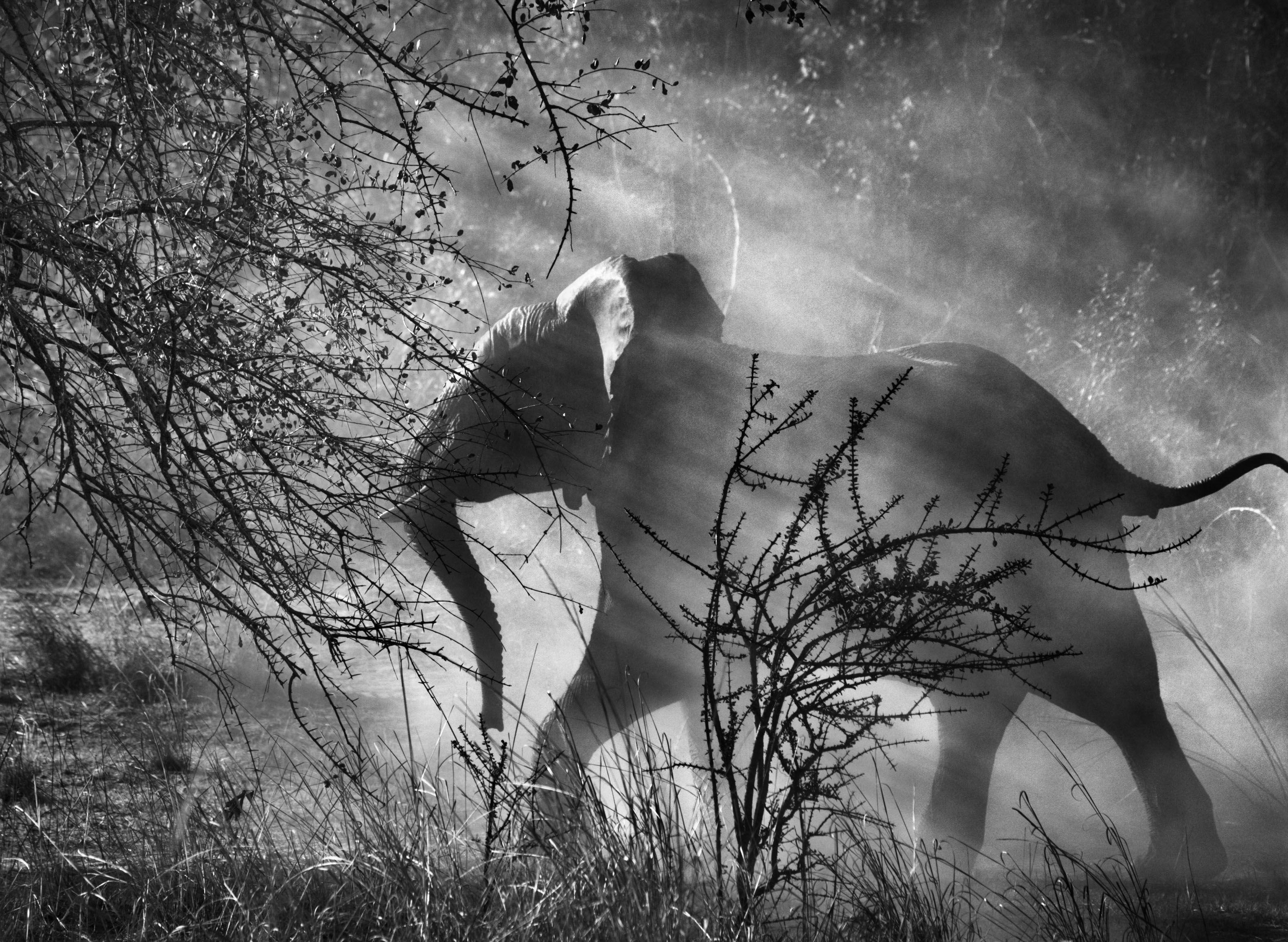 7._Salgado_Since_elephants_are_hunted_by_poachers_in_Zambia